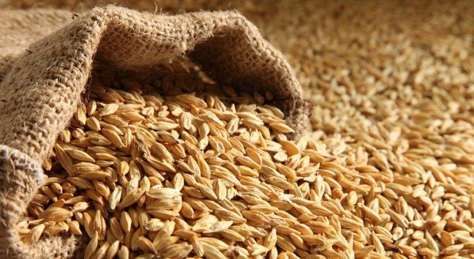 Запасы зерна в Казахстане достигли минимумов за последние пять лет