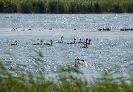 Глава минэкологии высказал позицию ведомства по вопросу осушения озера Малый Талдыколь