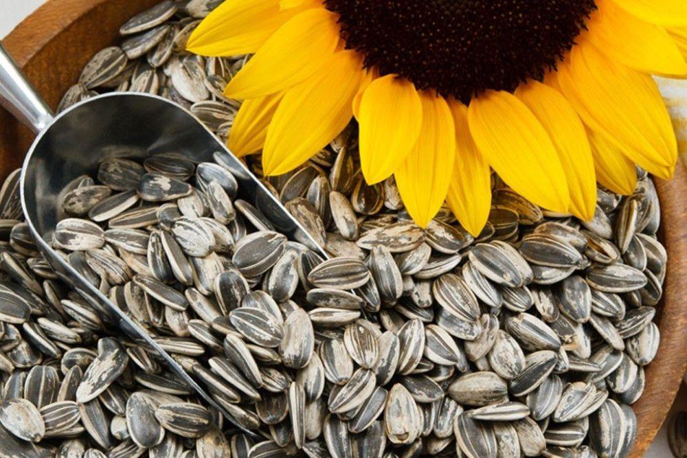 Восточный Казахстан прекратит экспорт семян подсолнечника и построит «яичную» птицефабрику