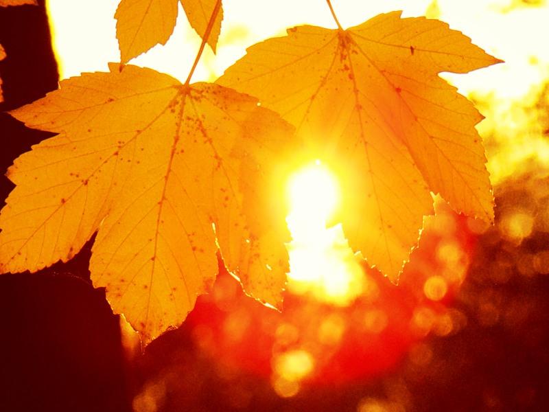 К выходным в Казахстане потеплеет , погода, Казгидромет, Прогноз погоды, Заморозки