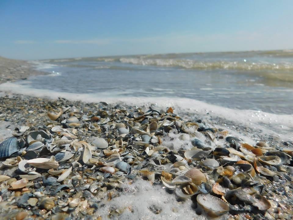 На берегу Урала в Атырау обнаружены пустые раковины моллюсков