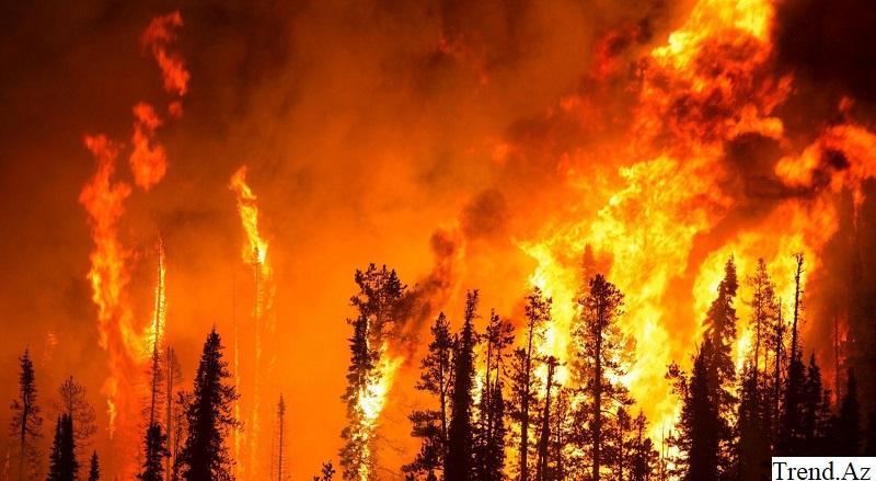 Бушующий в Калифорнии природный пожар признан одним из самых разрушительных в истории штата
