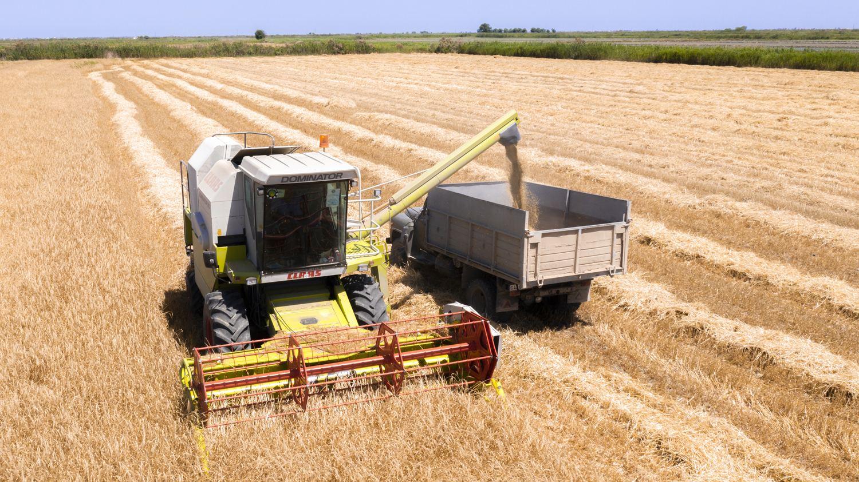 В Казахстане убрано 924,4 га урожая