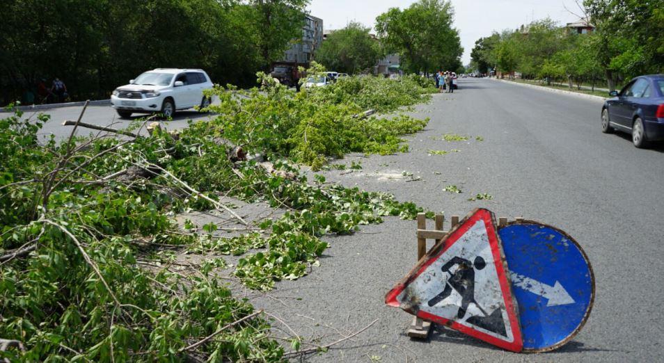 Вырубка деревьев в Семее была незаконной