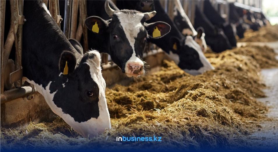 Животноводы в плюсе: валовой выпуск продукции в секторе вырос за год на 3%