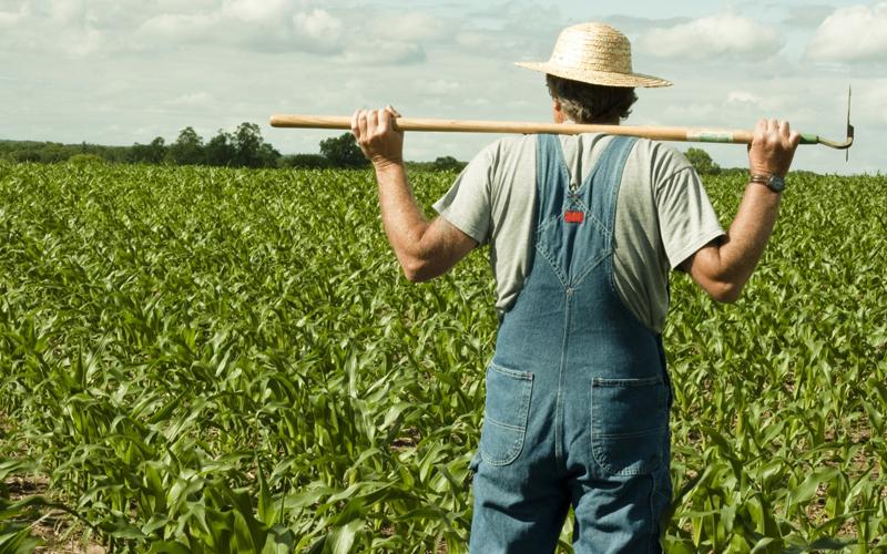 Вопрос дня: что не так с распределением субсидий среди аграриев?