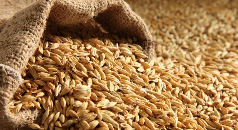 Конкуренция на зерновом рынке созрела, пшеница, зерно, АПК, Минсельхоз, Посевная, Евгений Карабанов, Виктор Асланов,Саят Шортан