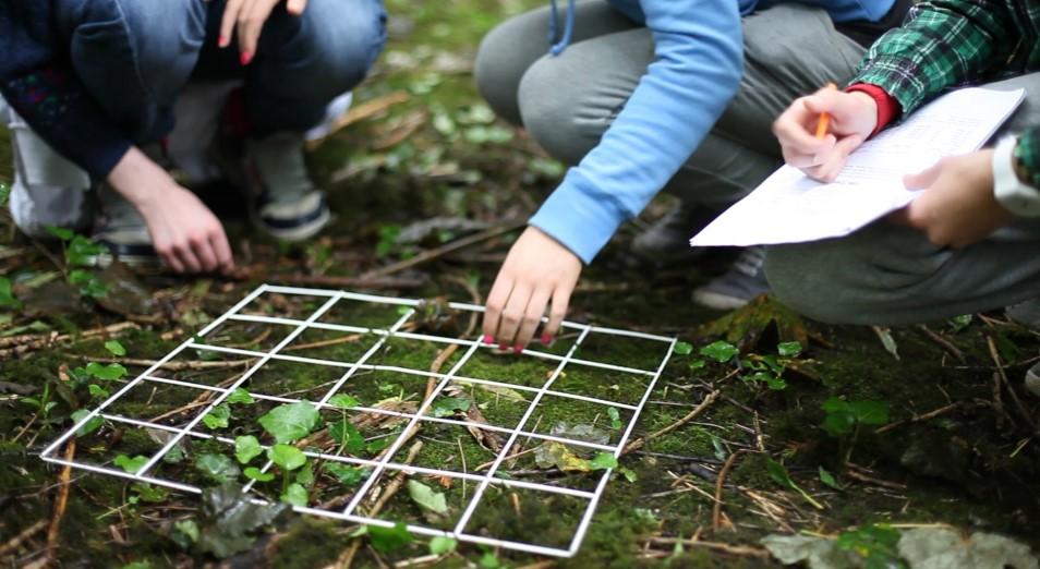 Экологов-общественников используют в борьбе с конкурентами – эксперт