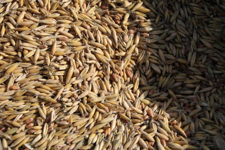 На элеваторы Казахстана поступило 3,6 млн тонн мягкой пшеницы