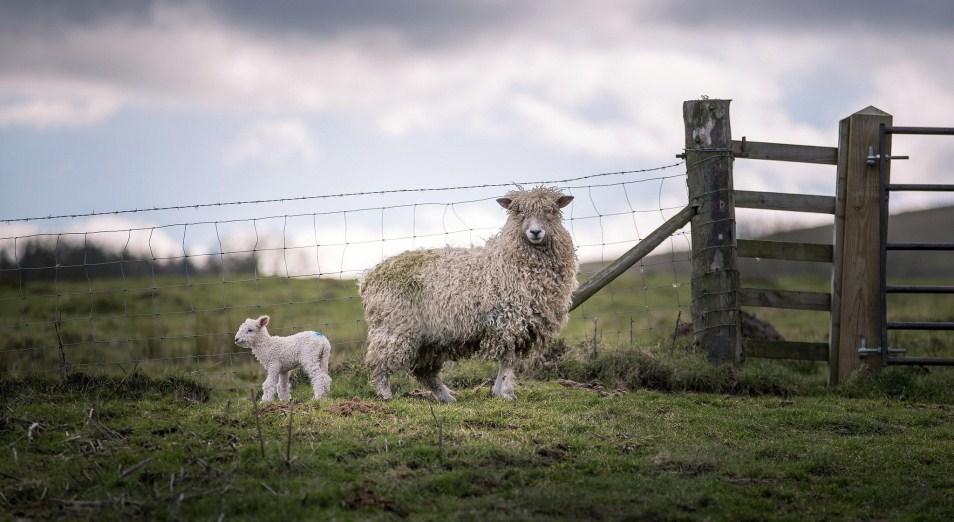 Неразбериха с землёй разоряет фермеров