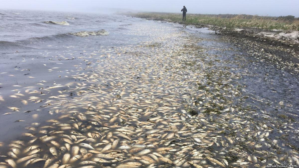 В реке Уил на западе Казахстана погибло около 5 тонн рыбы