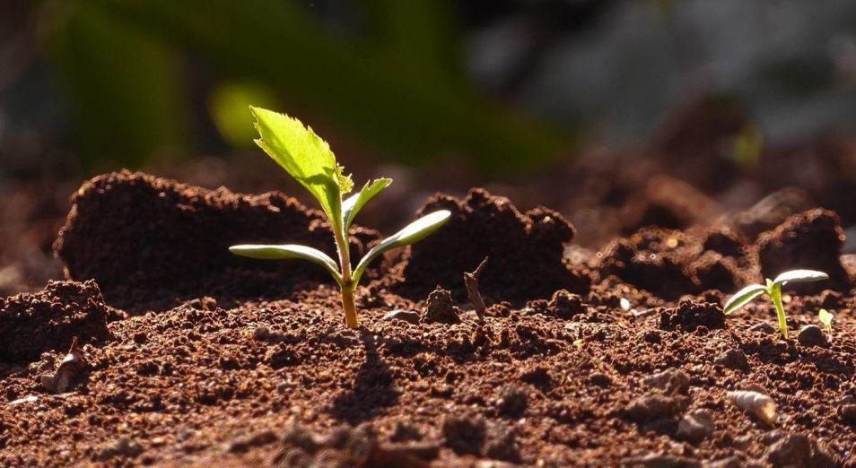Апробации технологии по демеркуризации ртути не нашлось копейки, ртуть, очищение почвы, экология, полевые работы, Павлодар