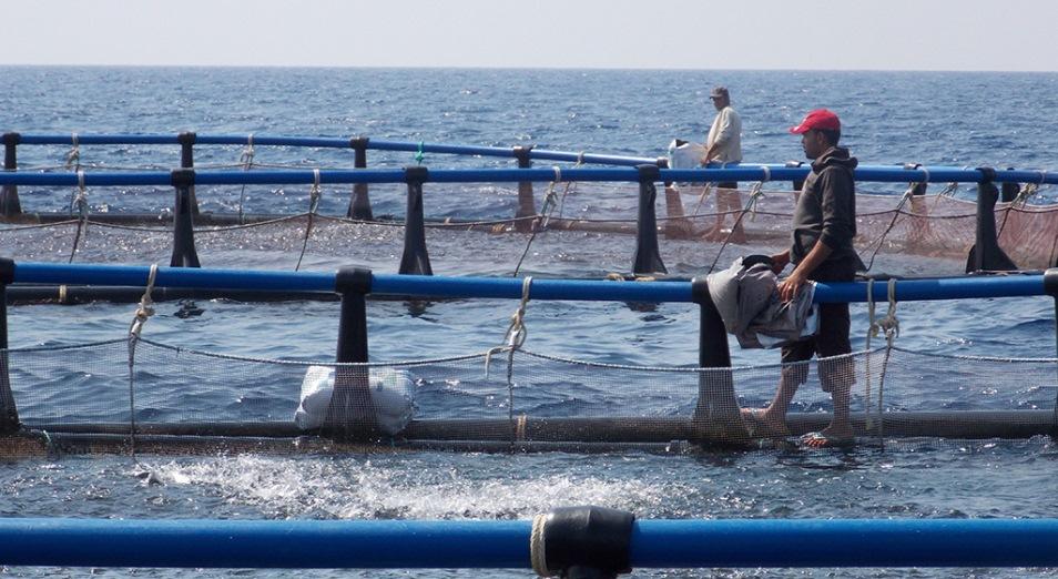 Не в малька корм, Рыбоводство, Рыба, морепродукты, АПК, рыбные хозяйства, Субсидии, Турция