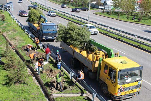В Алматы за субботу высадили почти семь тысяч деревьев.