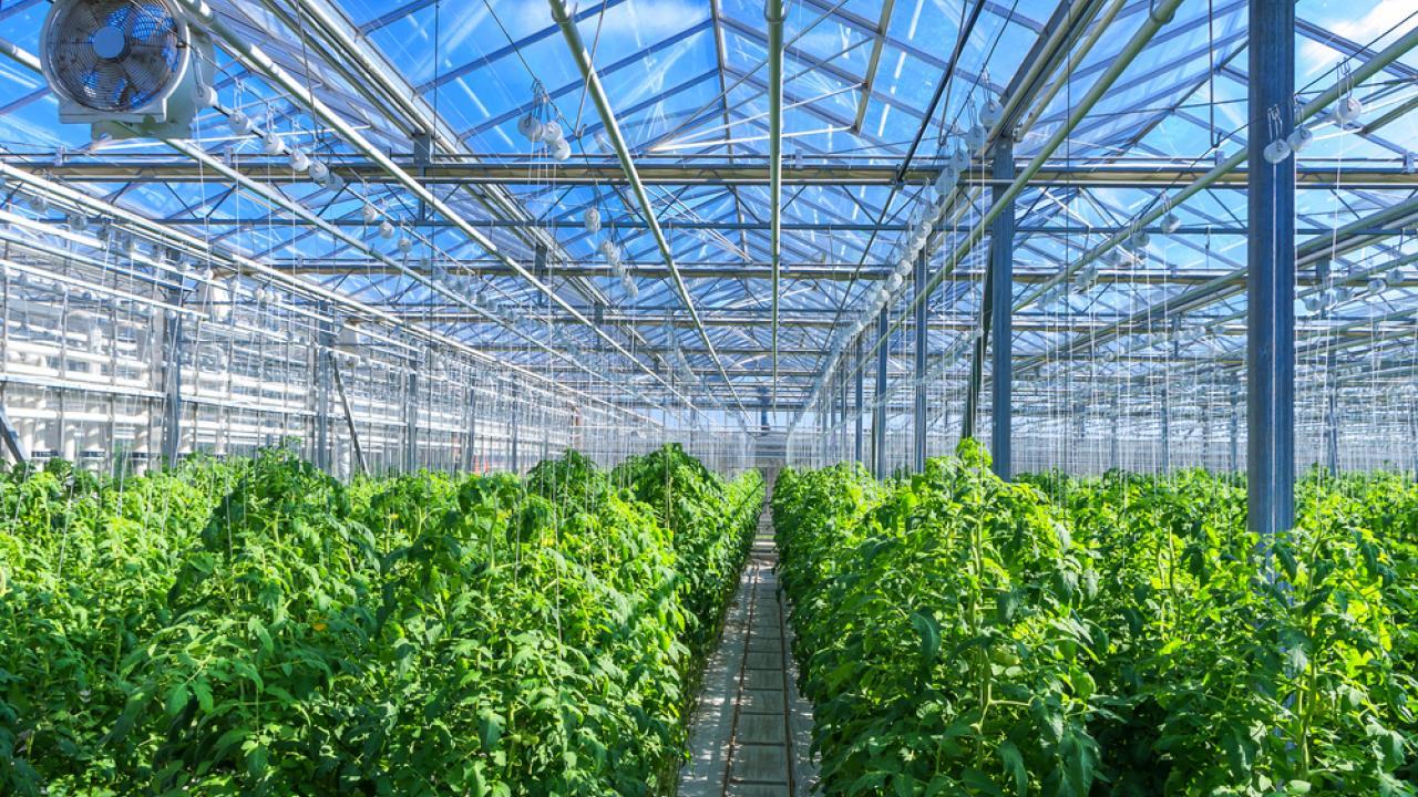 KazakhExport предоставил страховую защиту Green Capital Kazakhstan, Green Capital Kazakhstan, KazakhExport, АПК, Теплицы, Тепличный комплекс, Страхование