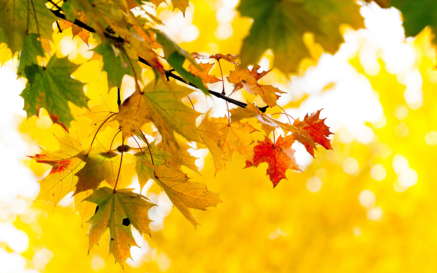 Погоду без осадков обещают синоптики 15 ноября в Казахстане
