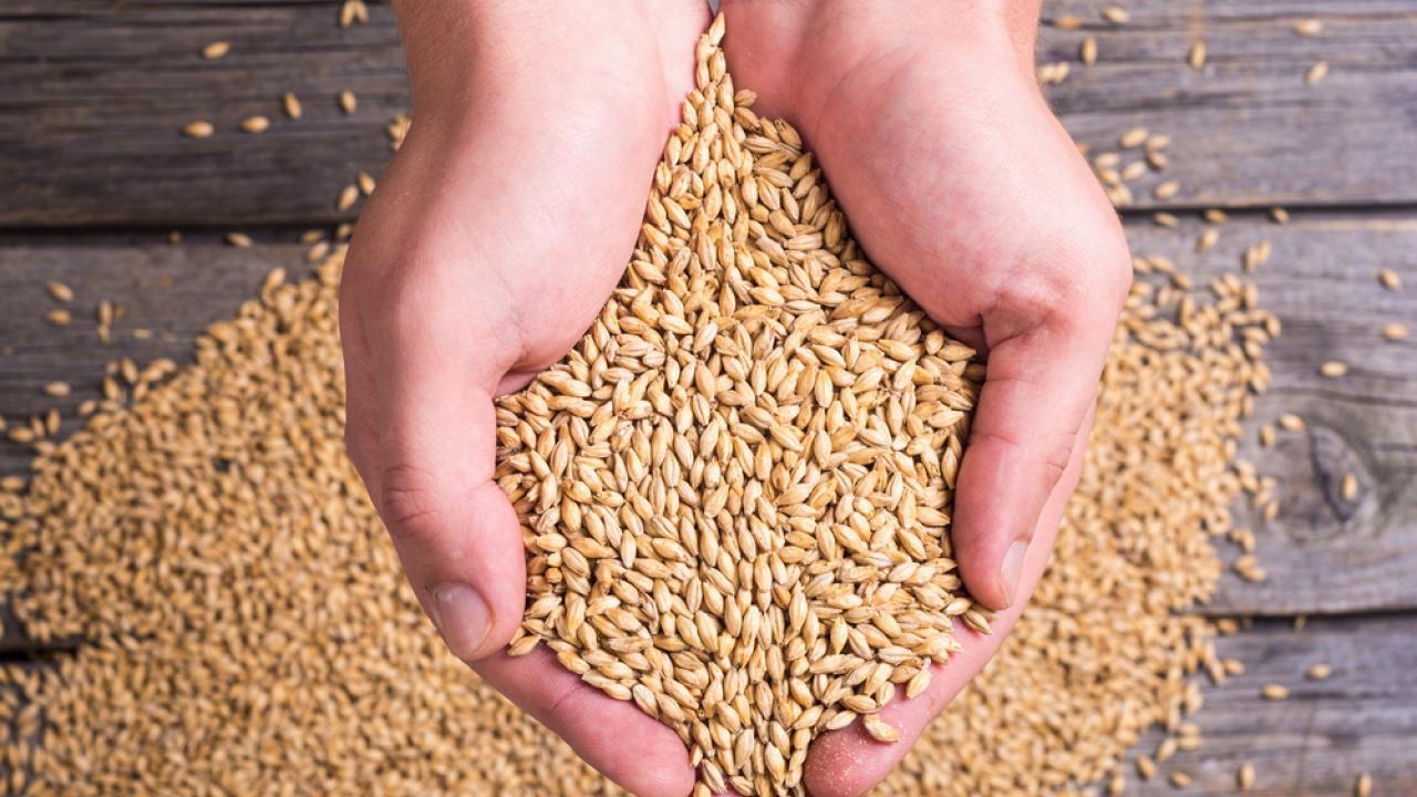 Фактический экспорт казахстанского ячменя зависит от политики Ирана, ячмень, экспорт, Иран, АПК, Зерновые, Санкции, Продкорпорация