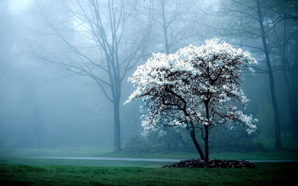Туман, гололед и пыльную бурю прогнозируют синоптики