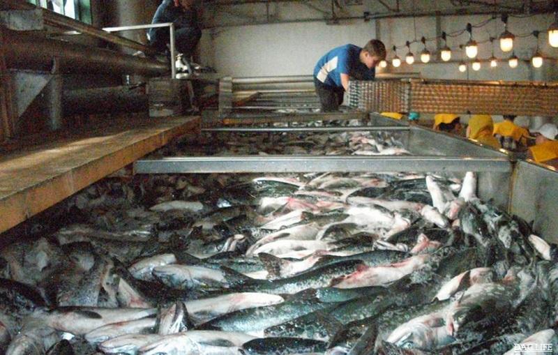Рыбный завод планируют запустить в Кызылординской области