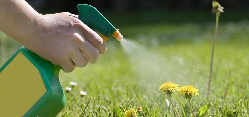 В ЕАЭС может появиться Совет руководителей национальных органов по карантину растений