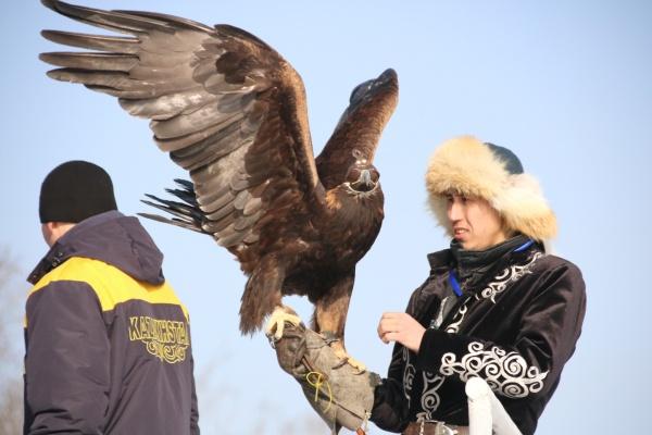 Второй открытый чемпионат Азии по охоте с ловчими птицами прошел в Алматы