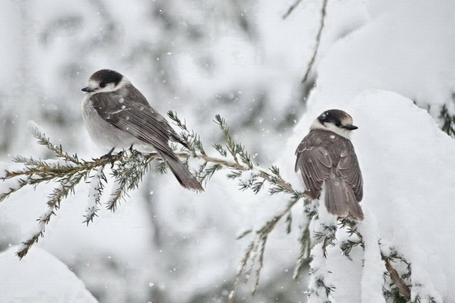 Мороз и гололед ожидают казахстанцев 9 декабря , погода, морозы, Метели, Казахстан