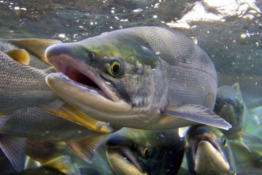 В рыбоводство РК планируют привлечь 345 млрд тенге инвестиций