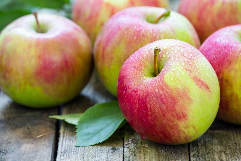 В Казахстане планируют сделать ставку на крупные яблоневые хозяйства