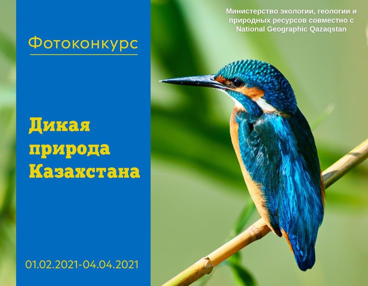 1,5 млн тенге составляет призовой фонд фотоконкурса «Дикая природа Казахстана»