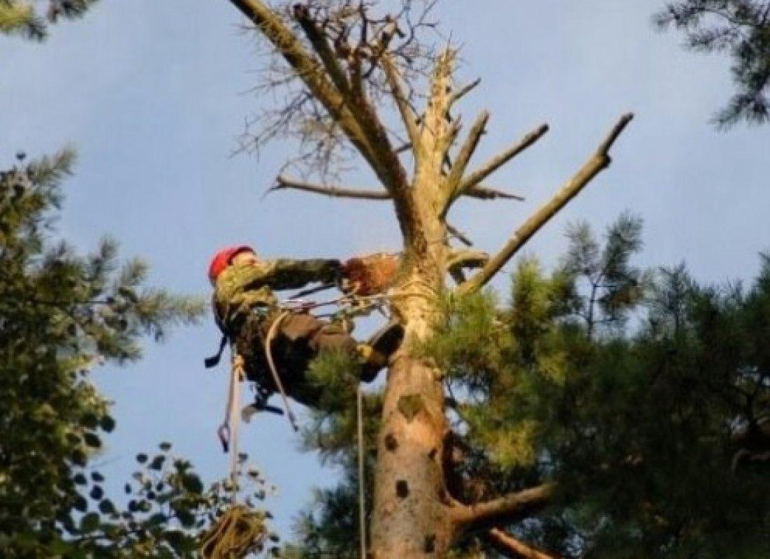 Парламент принял законопроект, ужесточающий наказание за незаконную вырубку деревьев
