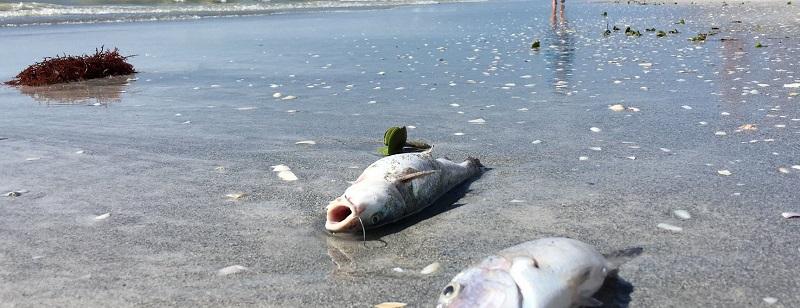 МСХ РК выясняет причины массовой гибели рыбы в Атырауской области