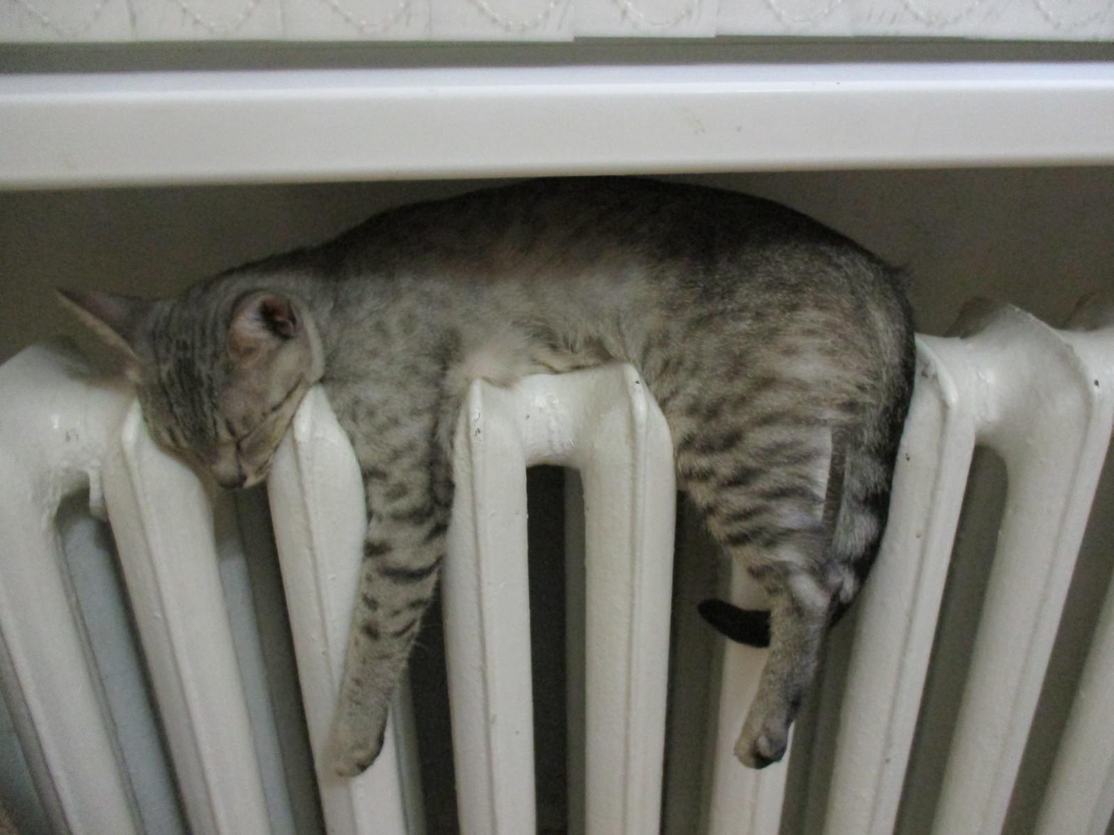 В каких городах РК самые высокие тарифы на центральное отопление
