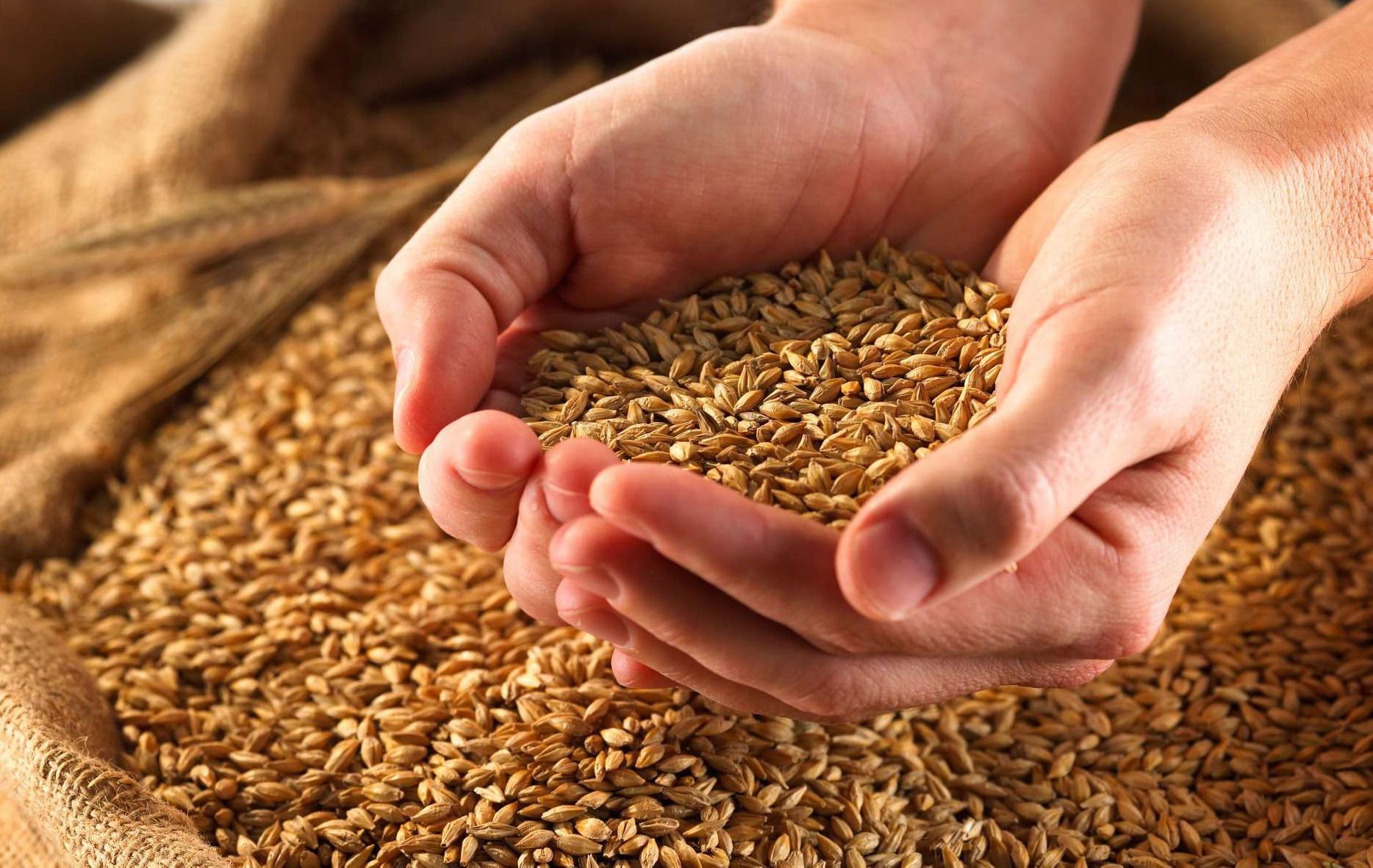 Казахстан собрал около 21,8 млн тонн зерна
