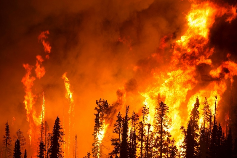 Природные пожары в Калифорнии охватили рекордные 809 тысяч гектар