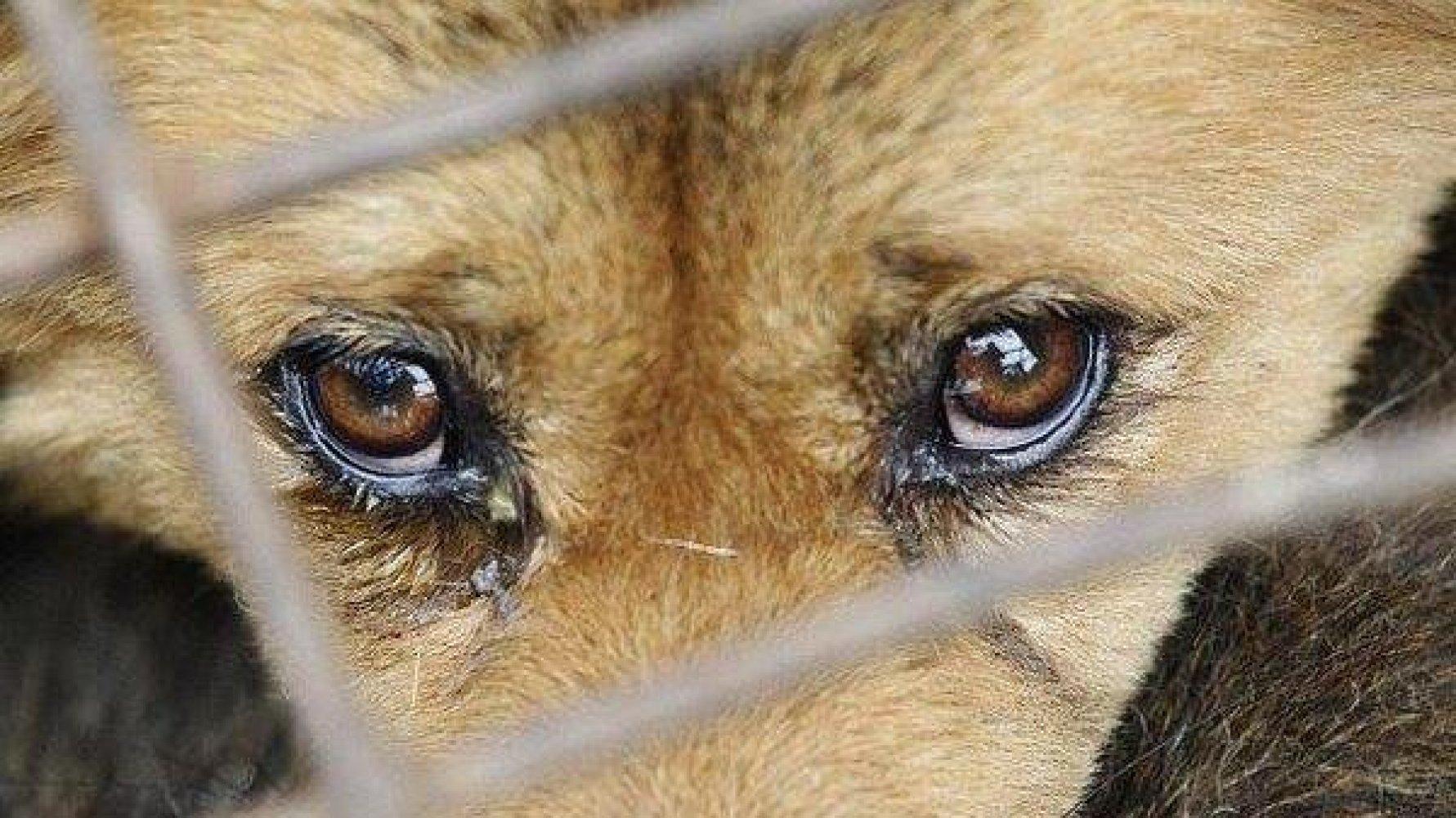 За жестокое обращение с животными – ограничение свободы до двух лет