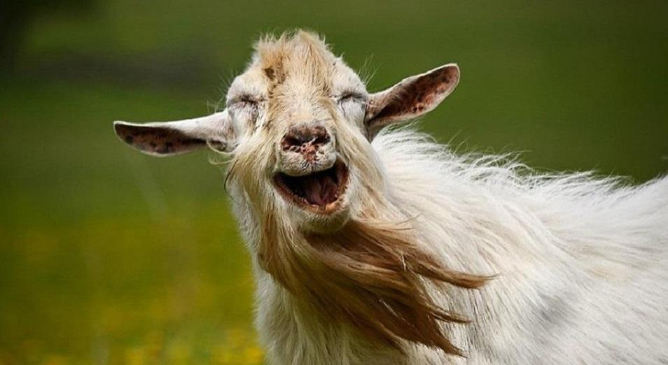 «Дайте денег на козу»: какие проекты претендуют на получение грантов