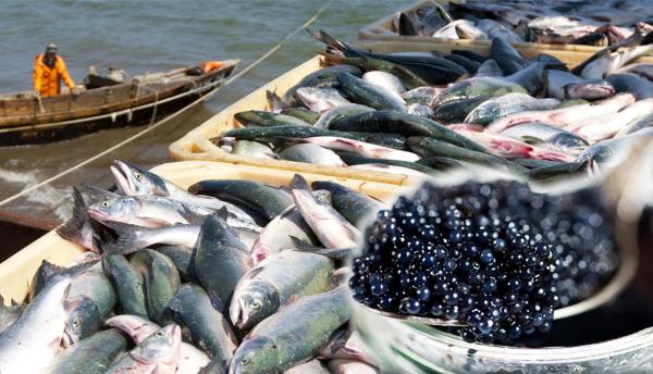 Балық шаруашылығын дамытуға бюджеттен 200 млрд теңге бөлінеді