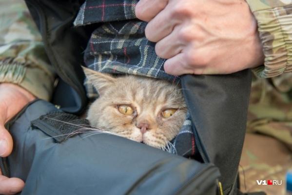 У электромонтера из Аксу входит в привычку спасать кошек