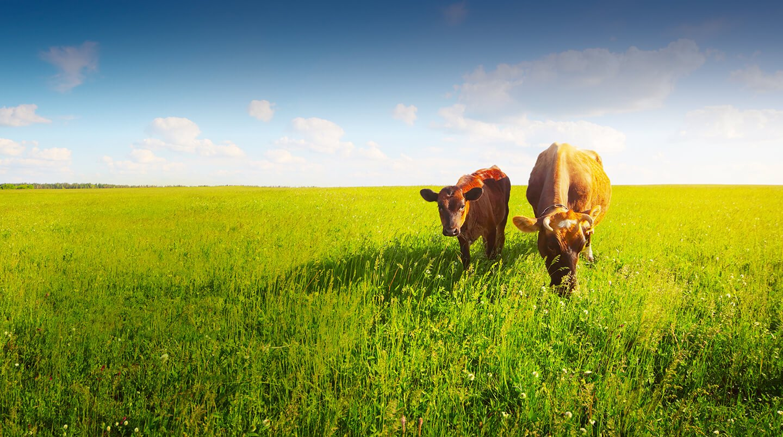 На сколько в Казахстане увеличилось поголовье скота и птицы