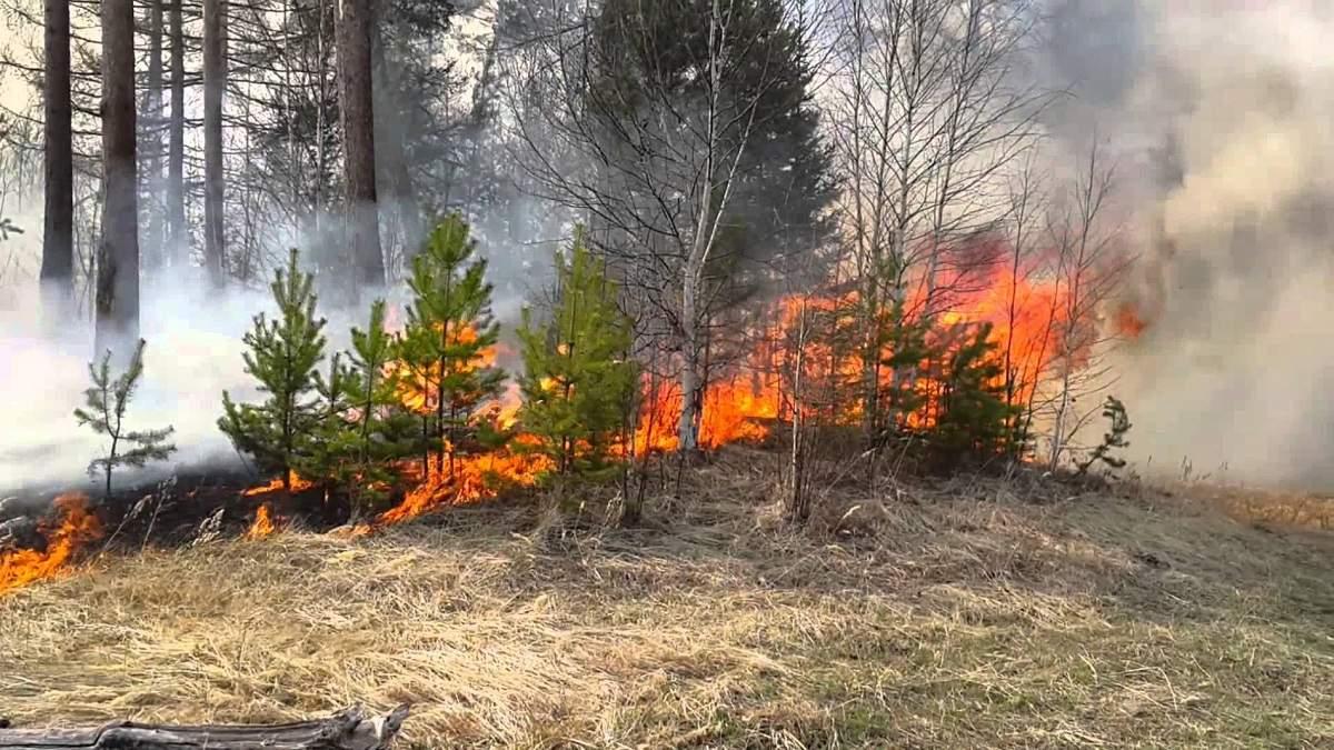 В Северо-Казахстанской области растет число  пожаров