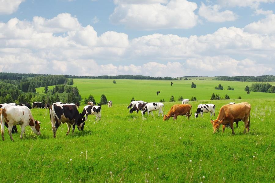 Нехватку пастбищ вблизи сел оценили в 29 млн га