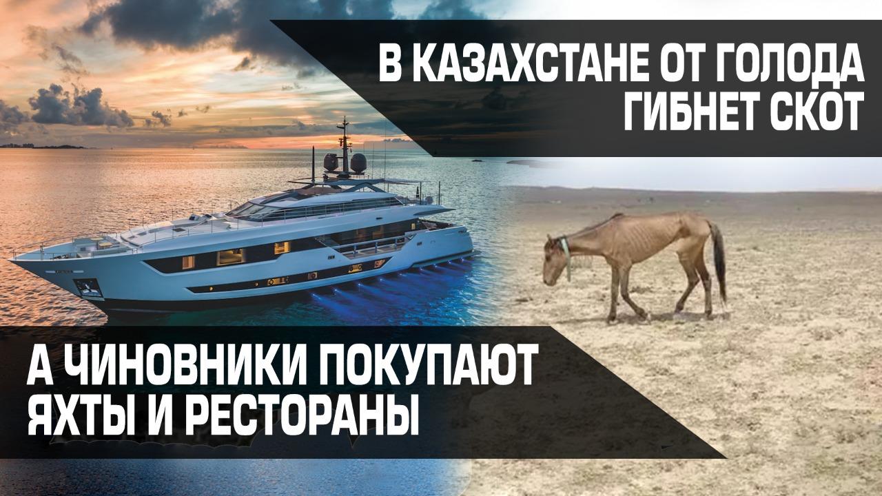 В Казахстане от голода гибнет скот, а чиновники покупают яхты и рестораны
