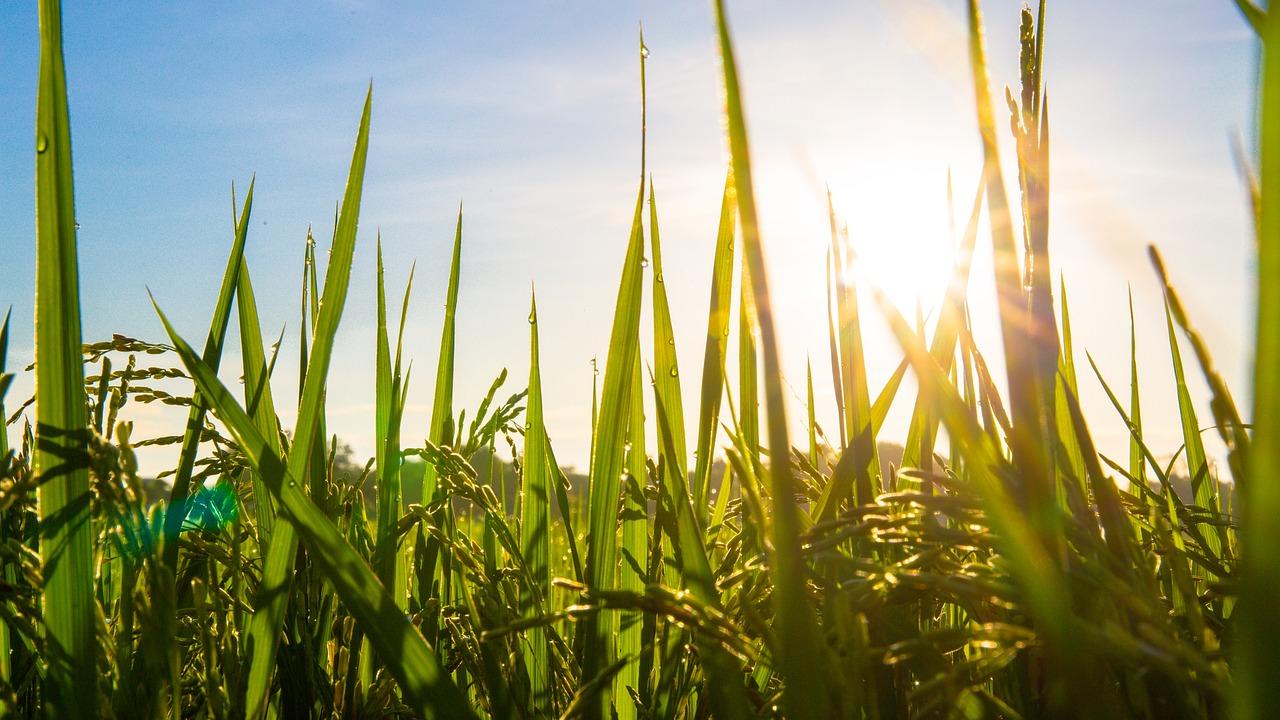 За полтора года в Павлодарской области ввели в сельхозоборот почти 400 тыс. га земель