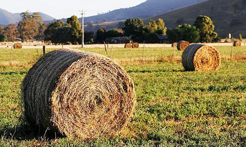 Заготавливать корма для скота за счет пустующих пастбищ поручил аким Атырауской области