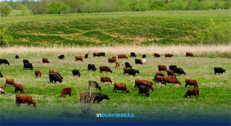 В Казахстане отметили рост заболеваний бешенством среди животных