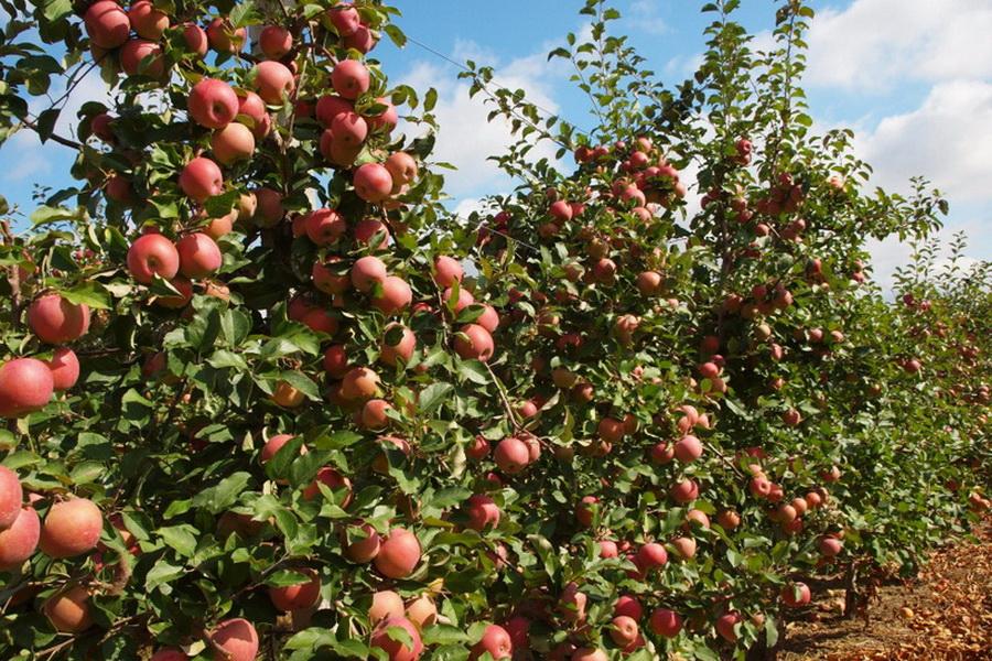$204 млн вложат в совместное казахстно-турецкое производство фруктов