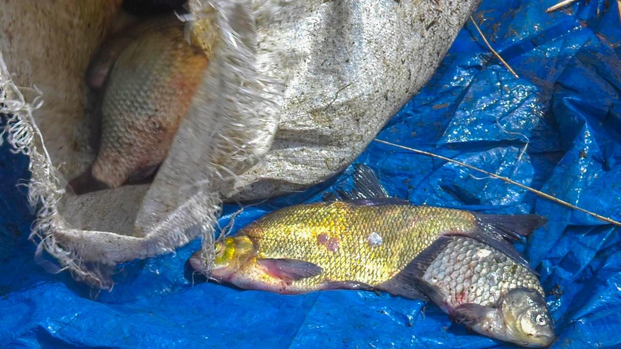Более двух тонн рыбы на 3 млн тенге выловили браконьеры в ВКО