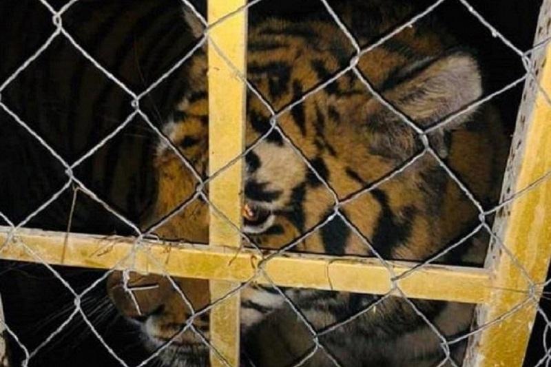 Передвижные зверинцы запретят в Казахстане
