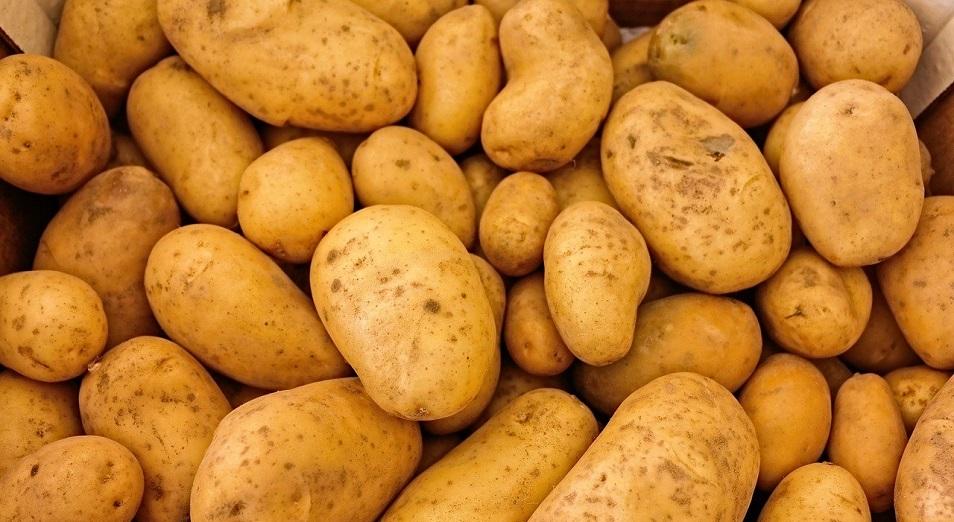 Североказахстанцы в считанные часы сметают с полок удешевленную картошку от стабфонда