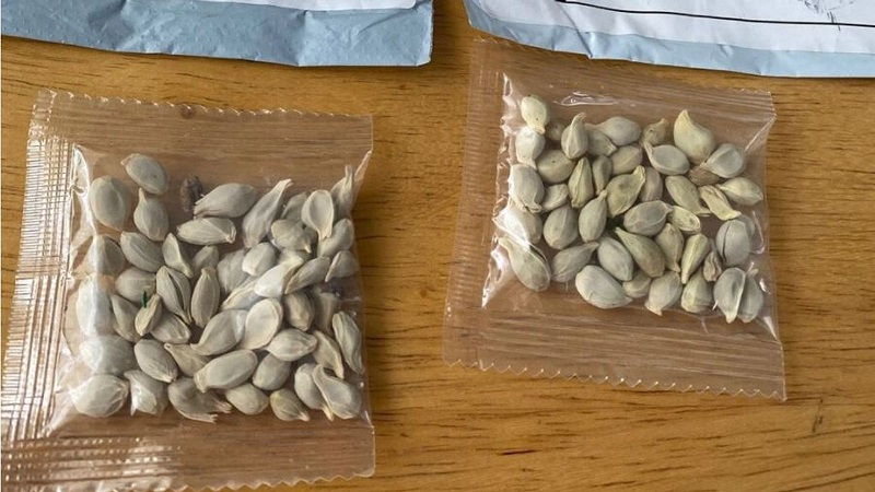 Amazon запретила продажу иностранных семян в США